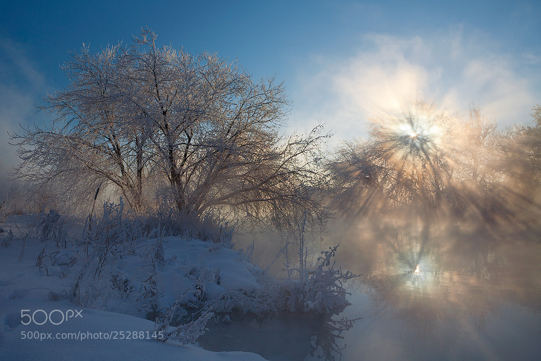 Photograph light-tree of life  by Marat Akhmetvaleev on 500px