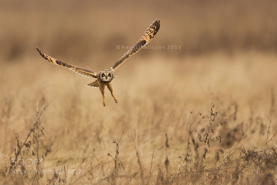Photograph The Take Off by Henrik Nilsson on 500px