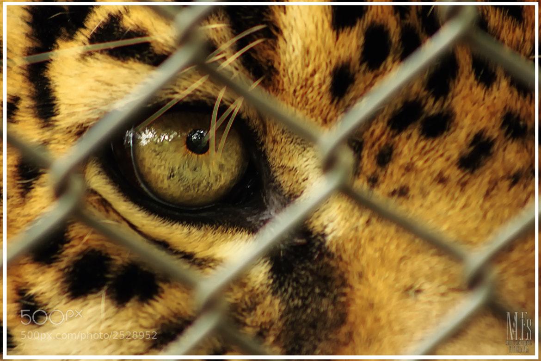 Photograph Dime Jaguar by Ma Li Es on 500px