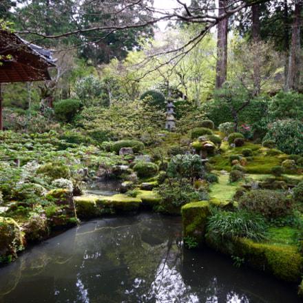 morning garden, Canon EOS KISS X7, Sigma 10-20mm f/4-5.6