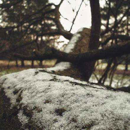 Frosty Bark, Fujifilm FinePix A202