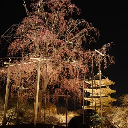 Night, Kyoto, RICOH PENTAX K-3 II, Sigma 17-50mm F2.8 EX DC HSM