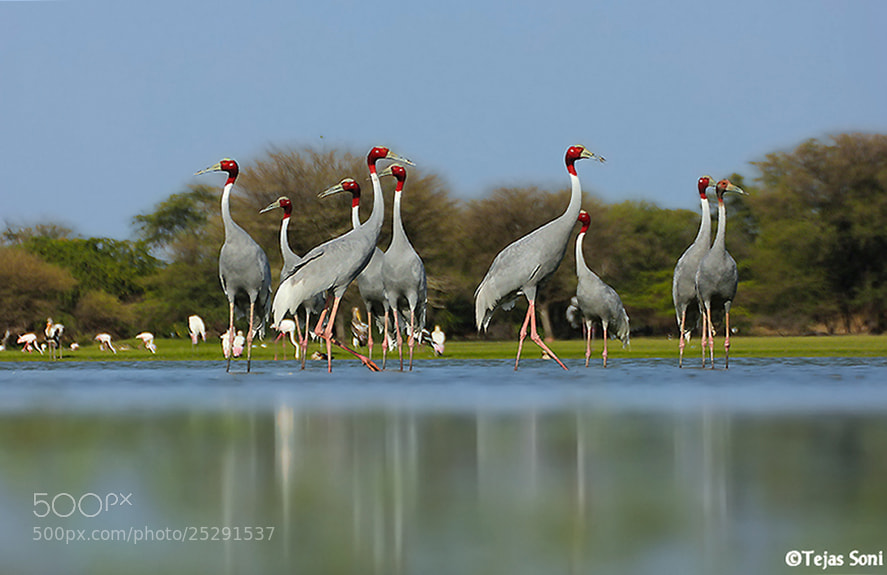 Photograph Gangs of thol  by Tejas Soni on 500px