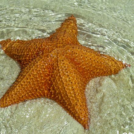 Estrella de Mar, Nikon COOLPIX S10