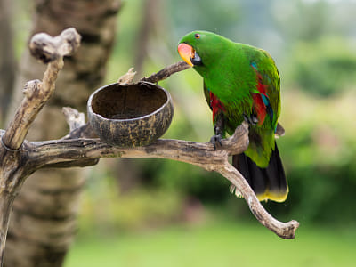 A green parrot at Bali Zoo