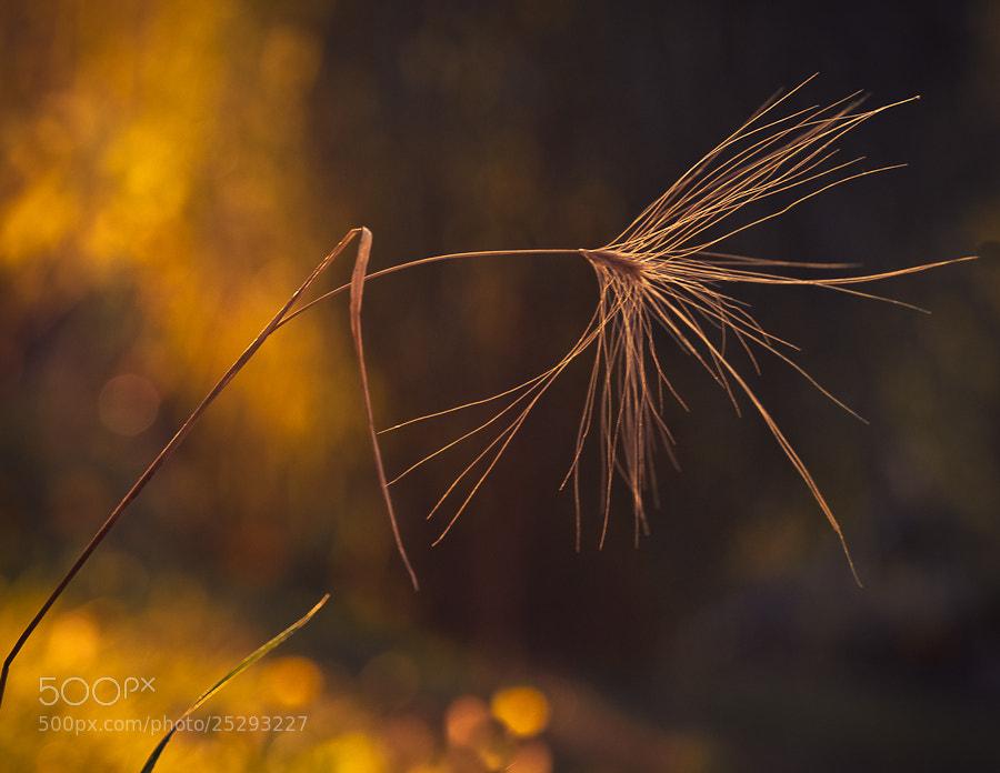 Photograph Golden light by Brane Kosak on 500px