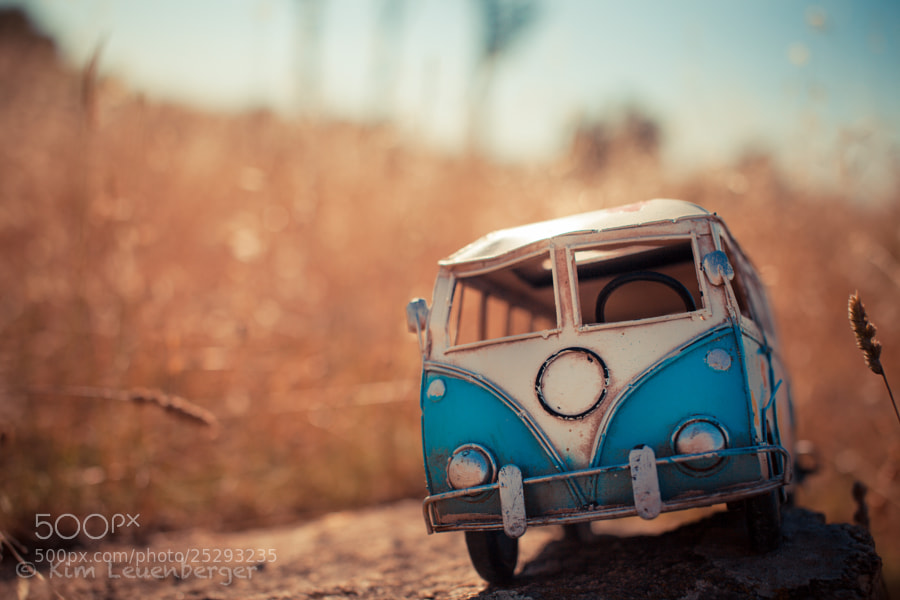 Photograph Lezarding under the Sun by Kim Leuenberger on 500px