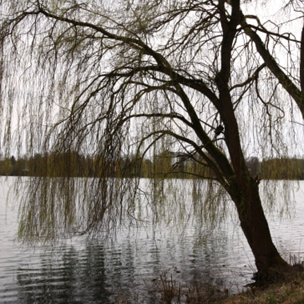 Willow Trees, Canon EOS 5D, Tamron SP AF 28-75mm f/2.8 XR Di LD Aspherical [IF] Macro