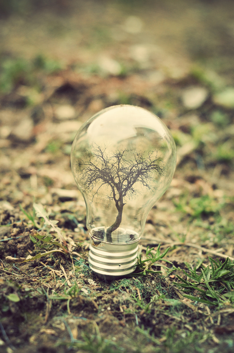 Photograph LifeBulb by Adrian Limani on 500px