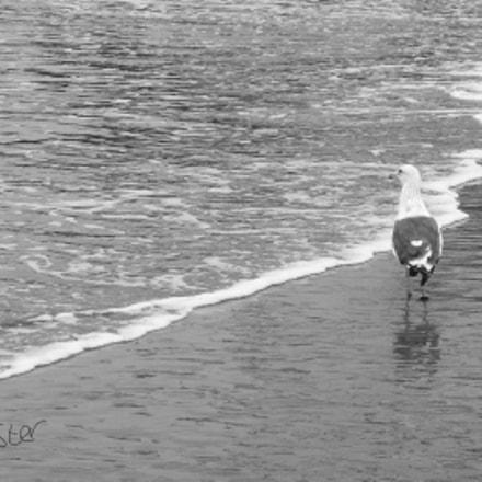 Walking the beach, Panasonic DMC-FZ48