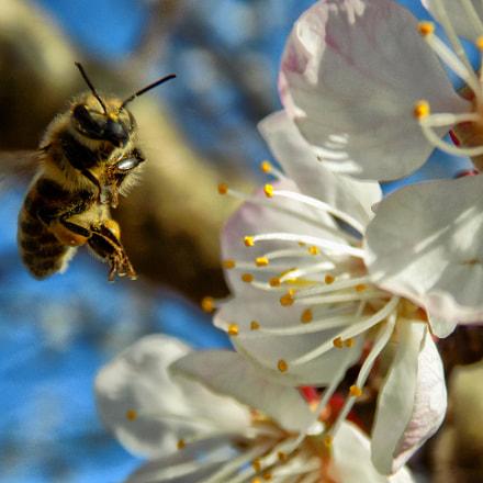 spring....., Nikon COOLPIX L330