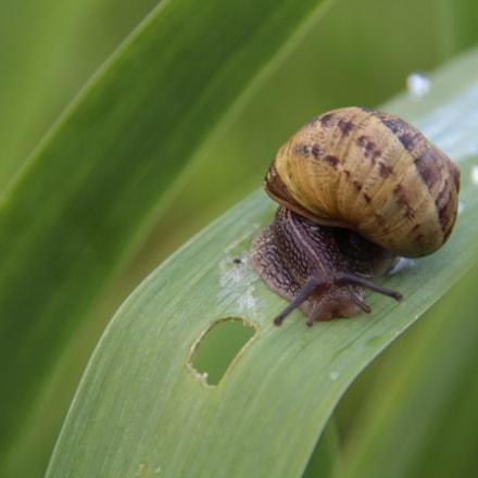 Snail, Canon EOS 1300D, Sigma 18-200mm f/3.5-6.3 DC OS