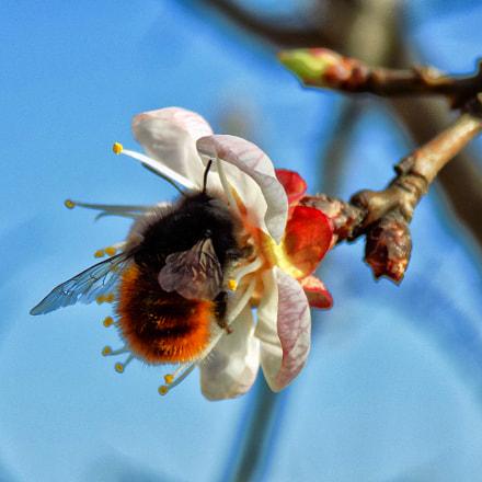 spring......., Nikon COOLPIX L330