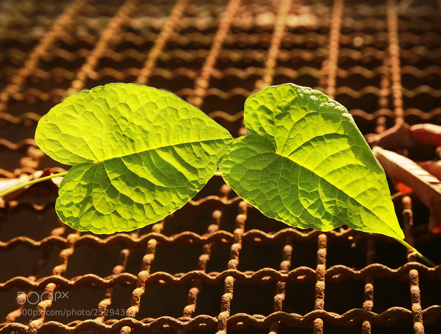 Photograph 2 hearts by Prachit Punyapor on 500px