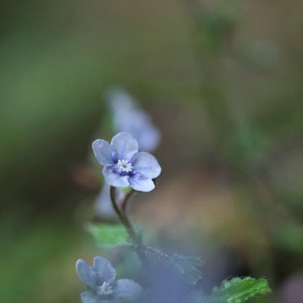 Blue fairy, Canon EOS 60D, Sigma 50mm f/1.4 EX DG HSM