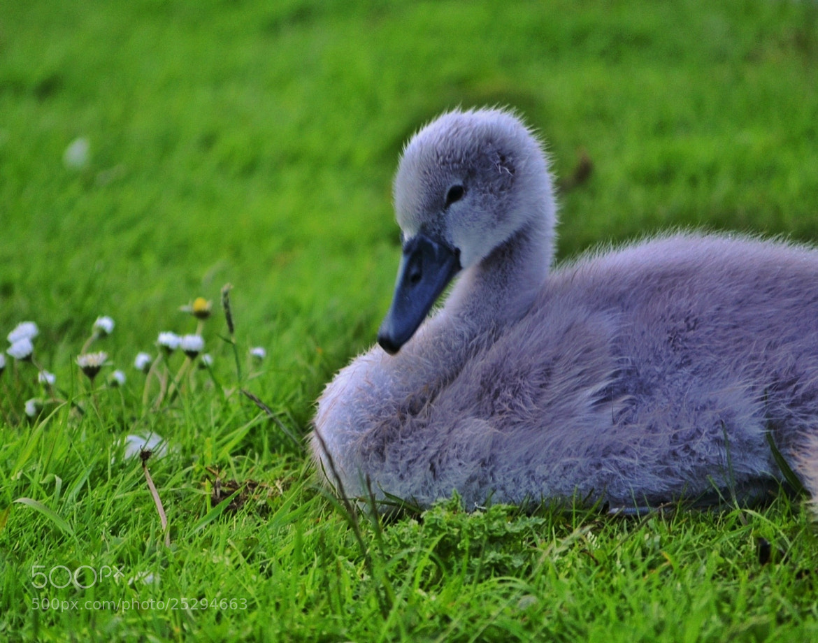 Photograph Good night little one... by Sarah johnson on 500px