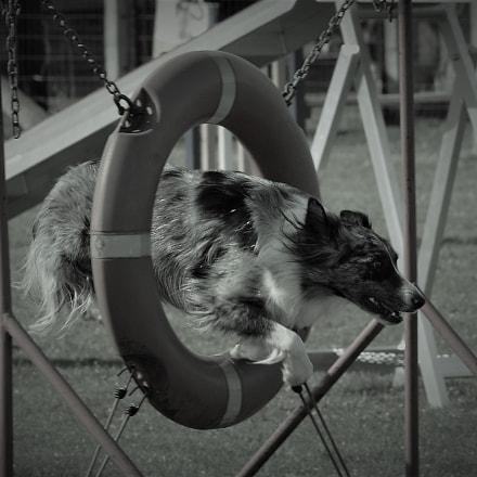 Dog training, Nikon D3200, Sigma APO 120-400mm F4.5-5.6 DG OS HSM