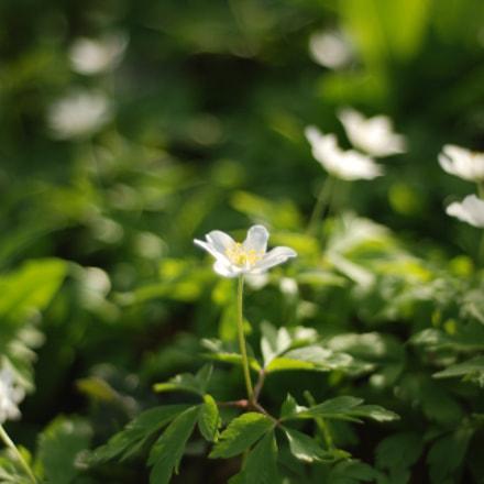Frühling, Nikon D80, AF Nikkor 50mm f/1.8 N