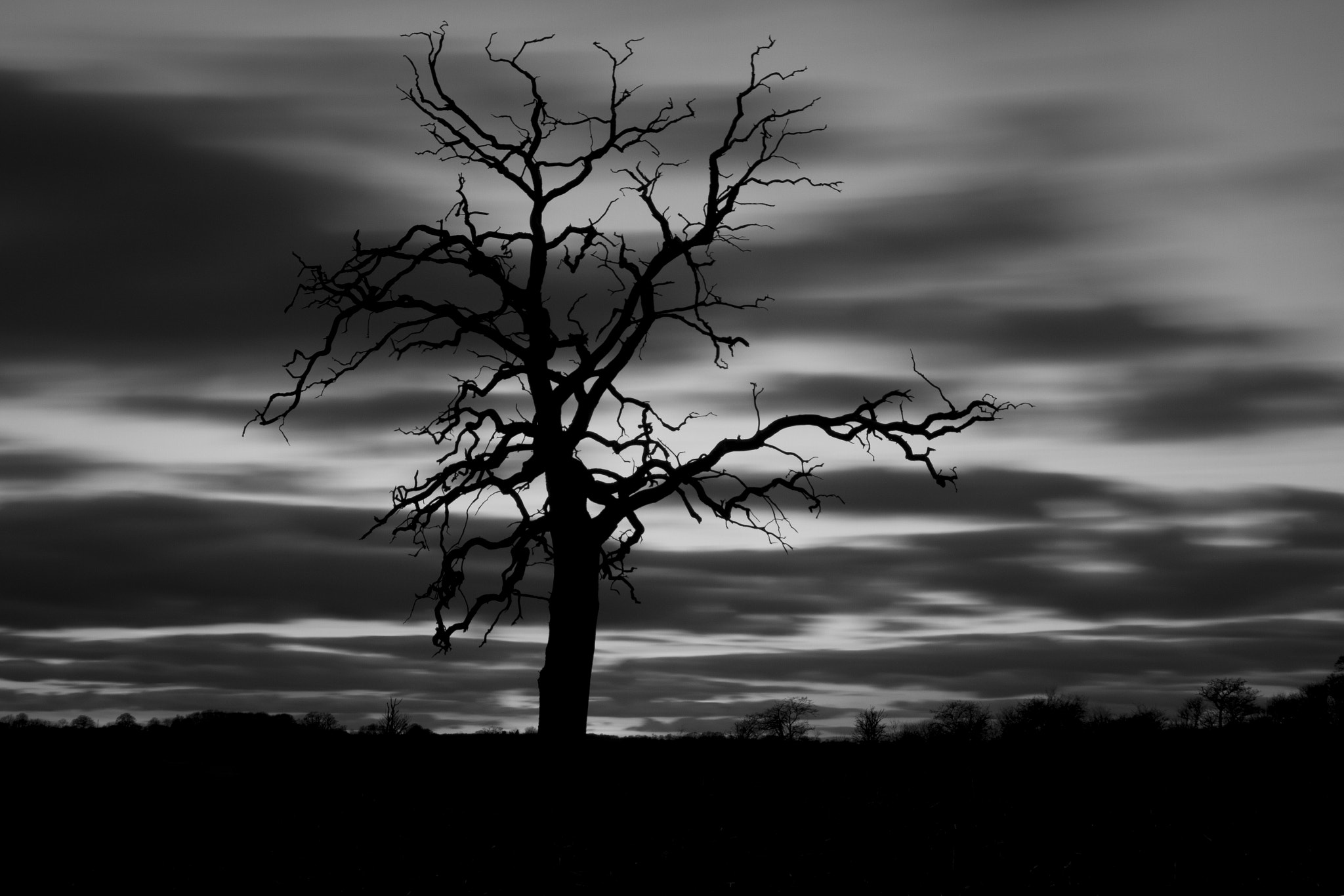 Photograph Creepy Tree by Jay Rowe on 500px
