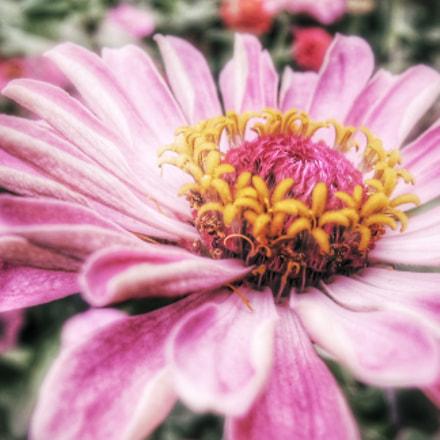Pink, Nikon COOLPIX P310