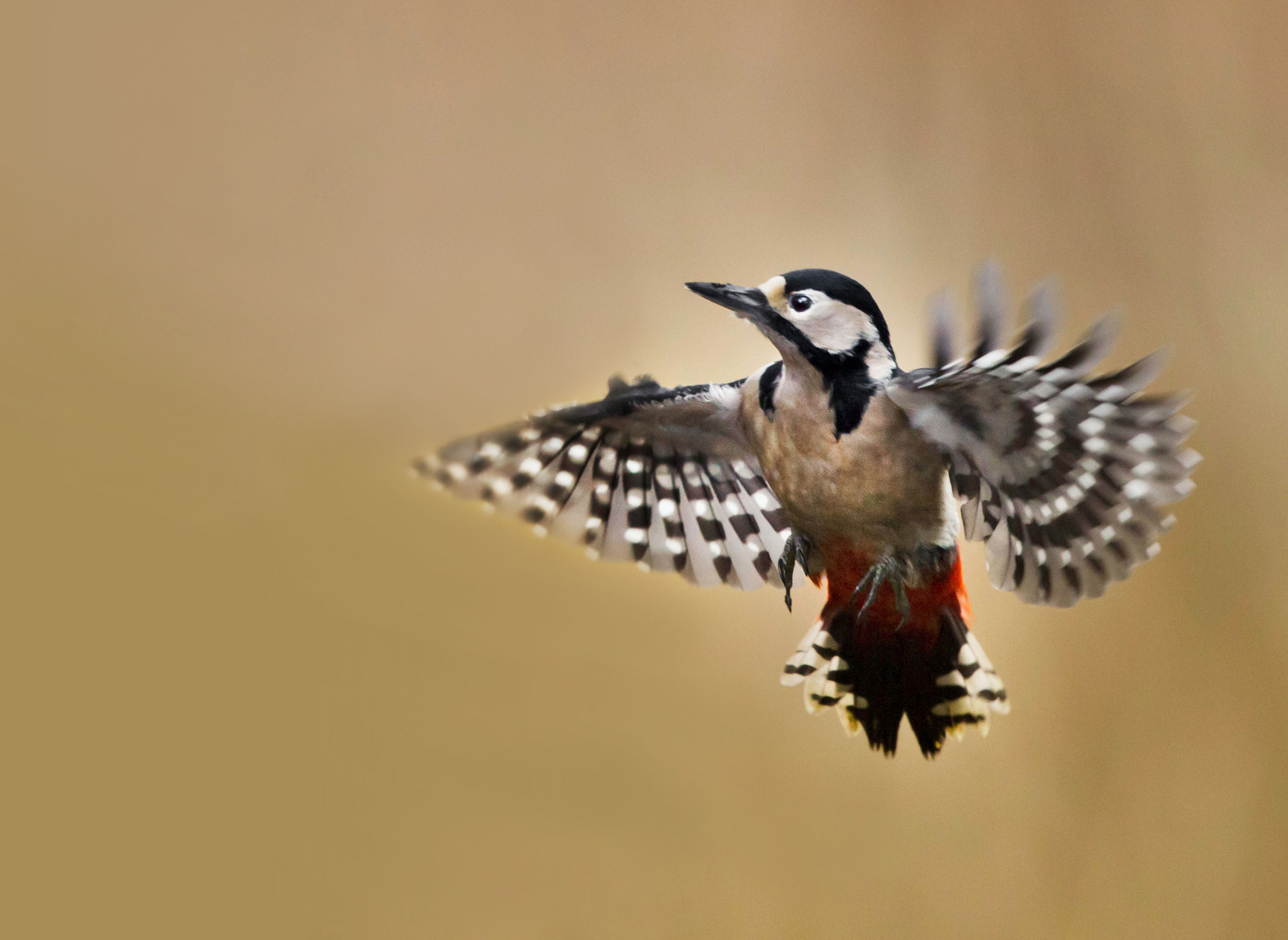 Photograph Hovering! by Sue Demetriou on 500px