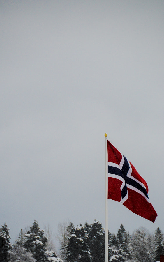 Norwegian flag at the edge of the woods.