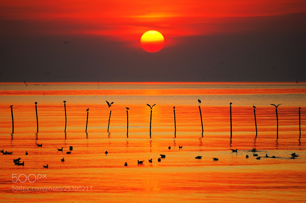 Photograph Golden Twilight by Photos of Thailand on 500px