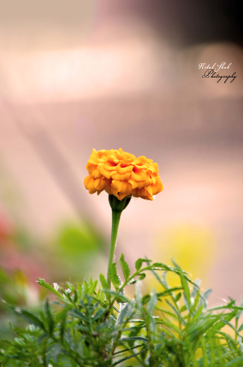 Photograph Blossoming In Nature :) by Nitul Shah on 500px