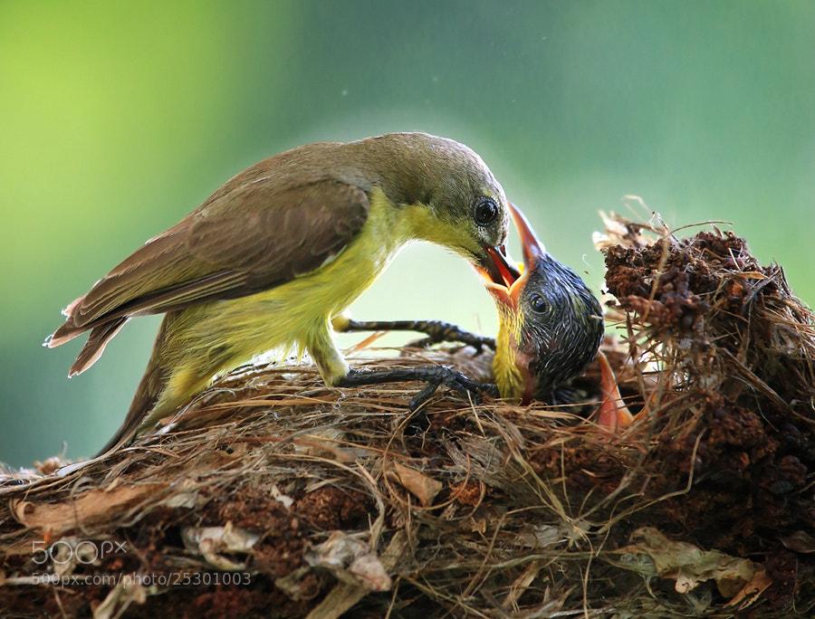 Photograph Feeding by Prachit Punyapor on 500px