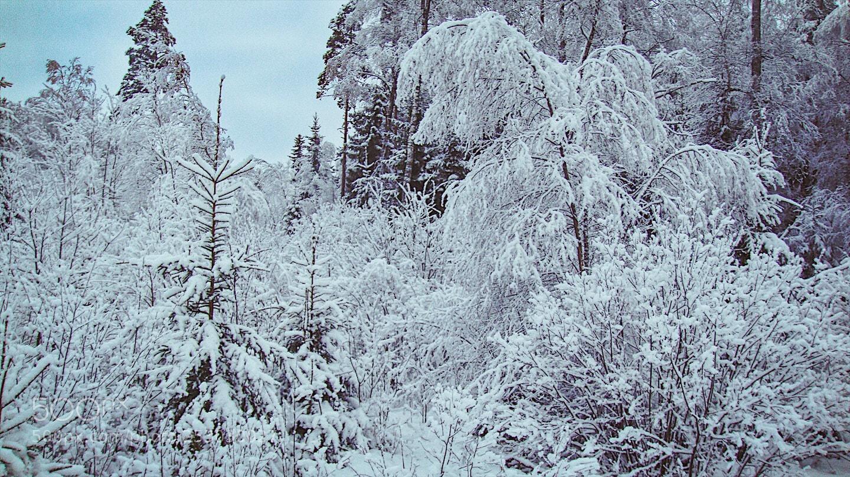 "Sony DSC-T300 sample photo. ""En  vinterdag"" photography"