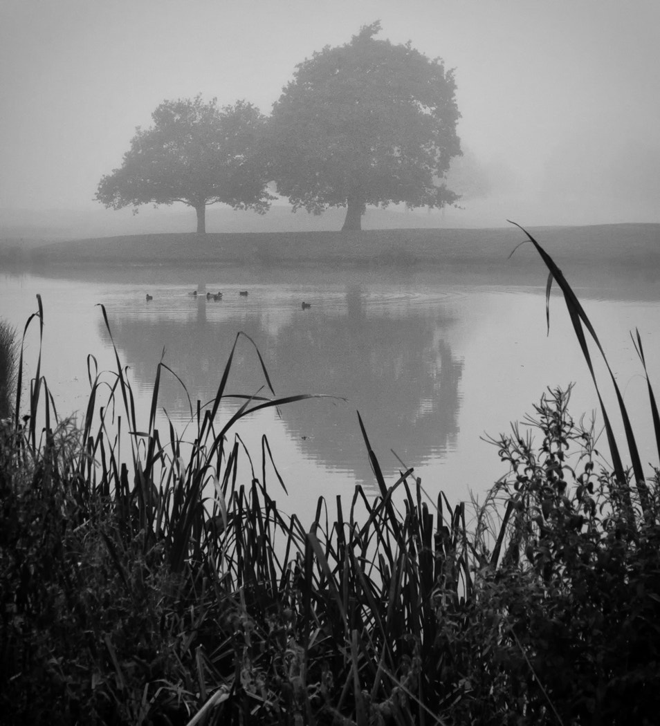 Photograph Foggy Tree Reflections by Craig poltock on 500px