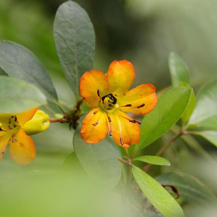 Nice flower, RICOH PENTAX K-70, Sigma 18-300mm F3.5-6.3 DC Macro HSM