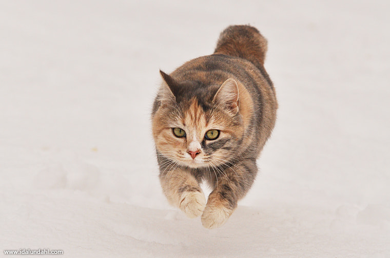 Photograph I'm coming! by Ida Lundahl on 500px