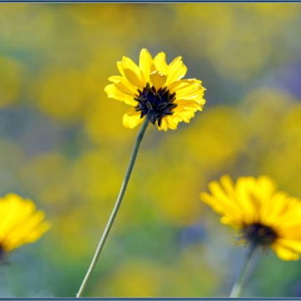 Spring Wildflowers, Nikon D850, Sigma APO 120-400mm F4.5-5.6 DG OS HSM