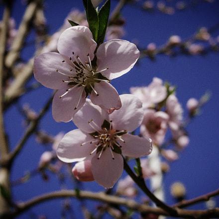 Spring trees, Canon POWERSHOT G6