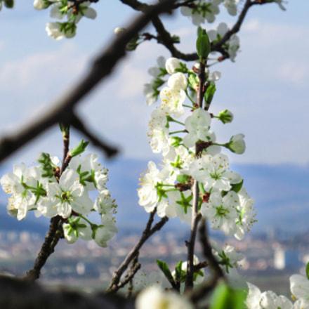 New chapter: Primavera!, Canon POWERSHOT ELPH 340 HS