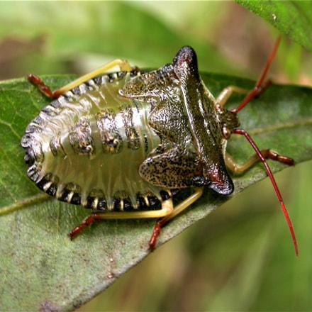 Bugs of Southern Brazil, Nikon E4500