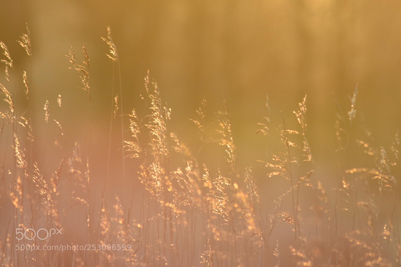 Cold foggy Morning IV