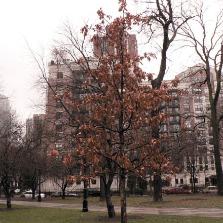 Flaming Tree, Panasonic DMC-FZ5