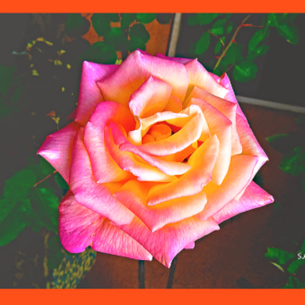 rosa, Panasonic DMC-FS5