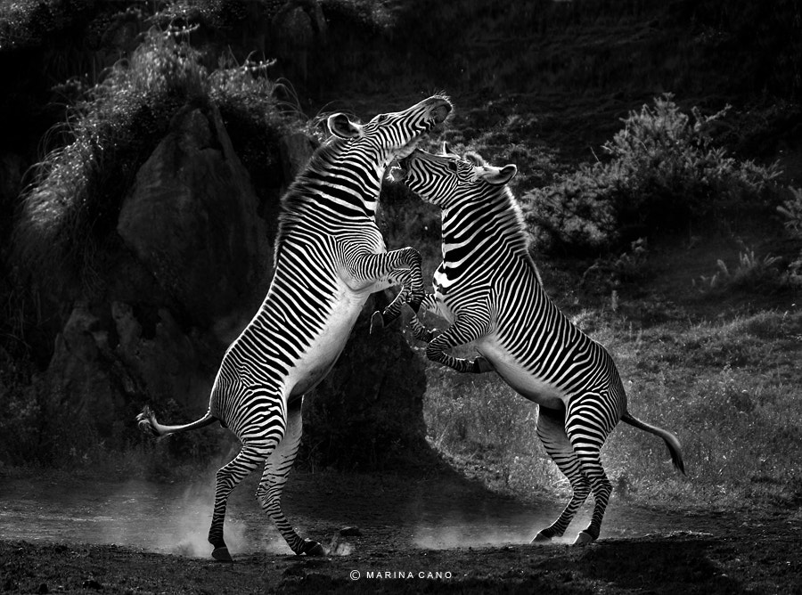 Photograph Dance with Me by Marina Cano on 500px