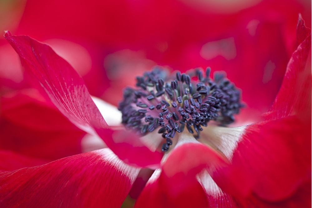 Photograph Spring Red by Jacky Parker on 500px