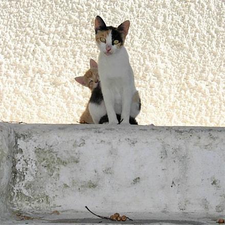 Mam`s little Cat, Nikon E5200