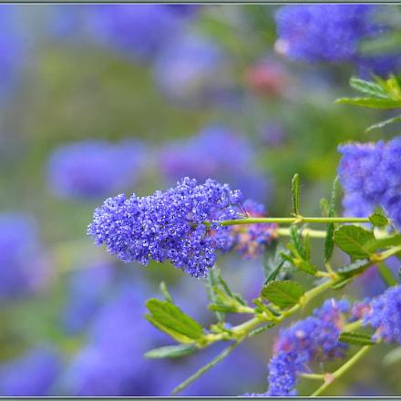 Spring Purpleness, Nikon D850, Sigma APO 120-400mm F4.5-5.6 DG OS HSM