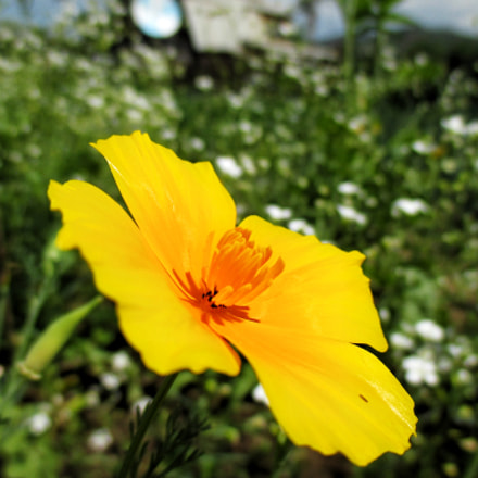 Yellow;), Canon IXUS 145