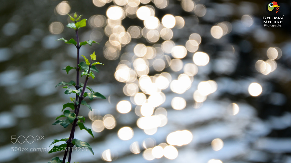 Photograph Bokeh.. by Gourav Mohire on 500px