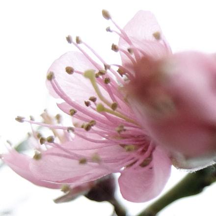 Spring , Fujifilm XQ2