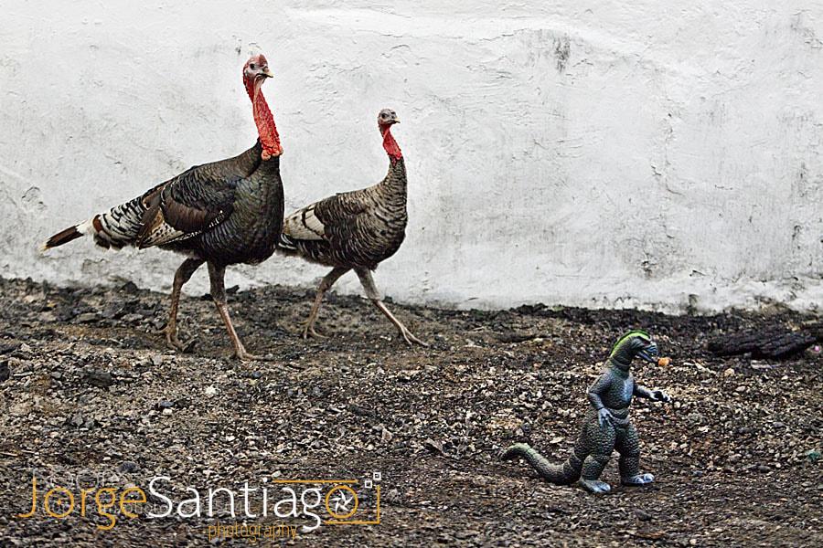 Photograph Turkeys and a dinosaur. by jlsantiago on 500px