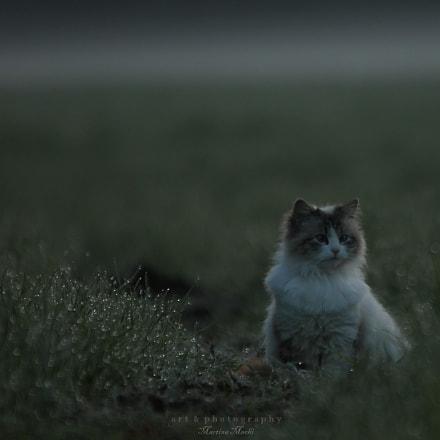 *neighbours cat II*, Canon EOS 1100D, Sigma 150-500mm f/5-6.3 APO DG OS HSM