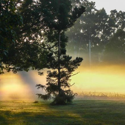 Foggy Morning in the, Panasonic DMC-FX2